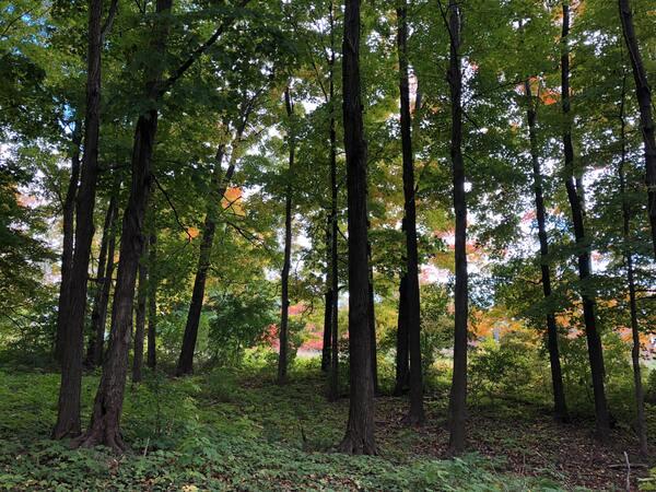 undeveloped property or landscape